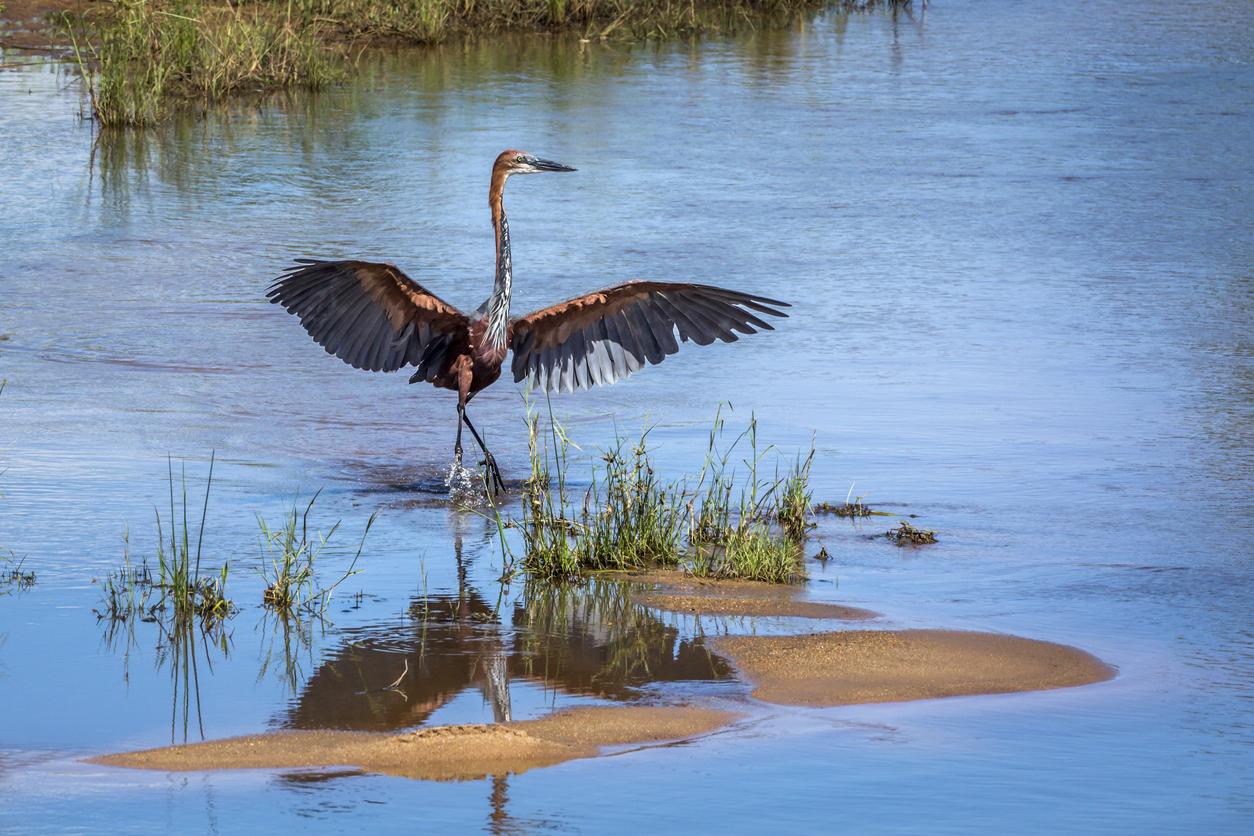 10 vogels grootste spanwijdte