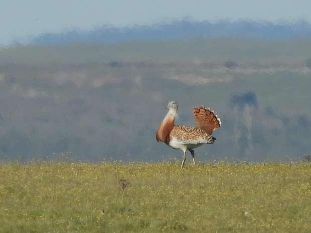 Roots reis naar het vogelrijke Extremadura