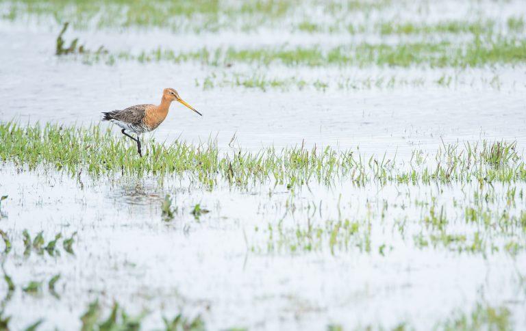 De mooiste foto's van vogels van de Lage Landen