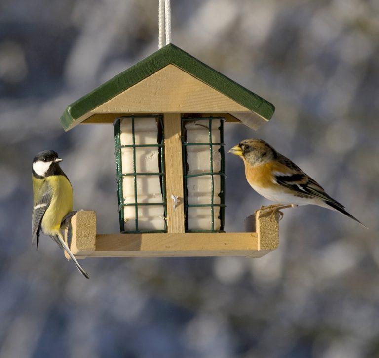 Tuinvogels lokken doe je met de Roots Tuinvogelbox!