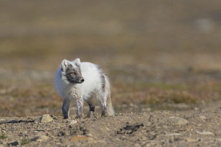 Winnende fotograaf fotografeert Spitsbergen