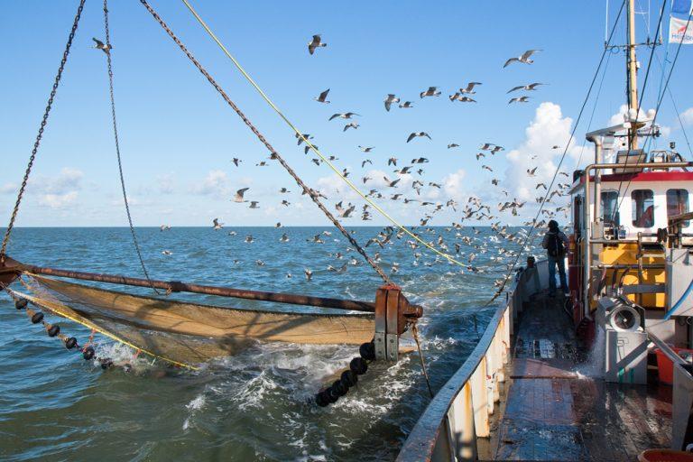 Zoektocht naar haaien in Waddenzee