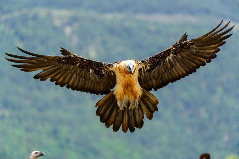 Waarom Spanje een topbestemming is voor Nederlandse natuurliefhebbers