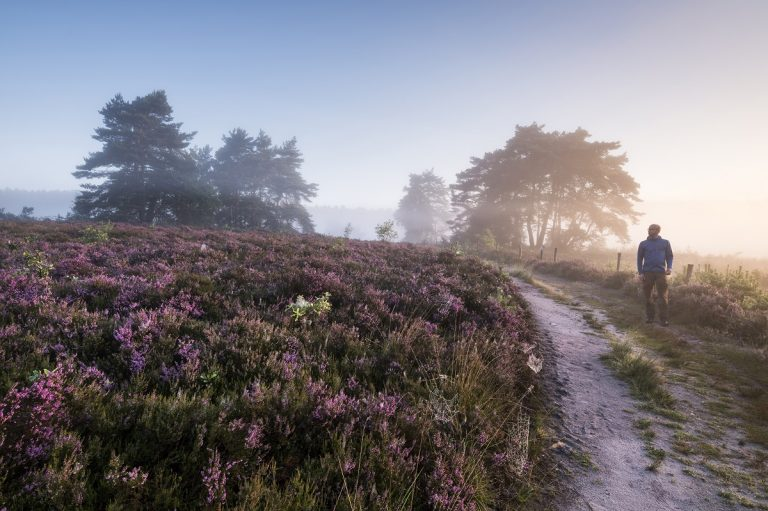 Nieuwe wandelroute: heidewandelen in De Teut