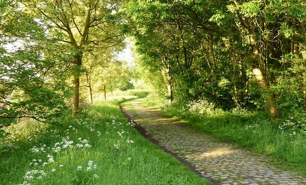 Hobokense Polder: een groene oase in Antwerpen