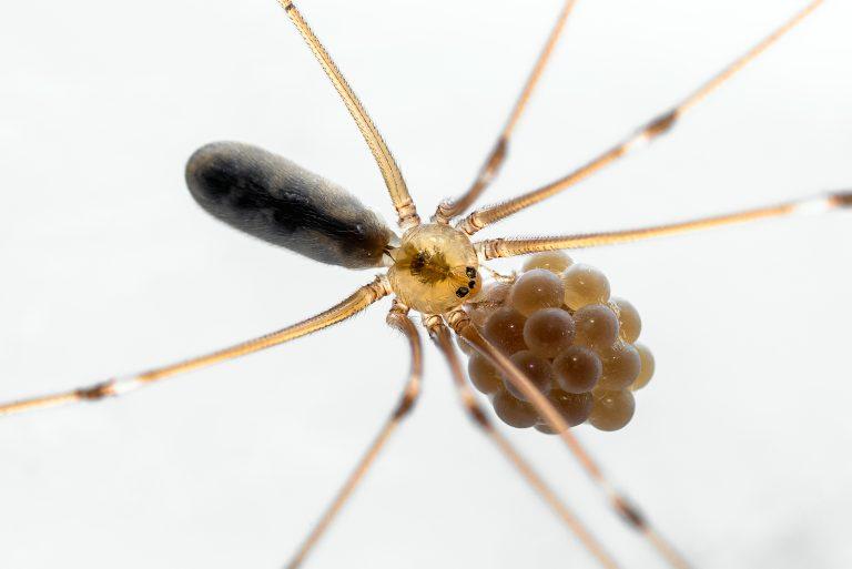Een spin fotograferen, dat doe je zo…