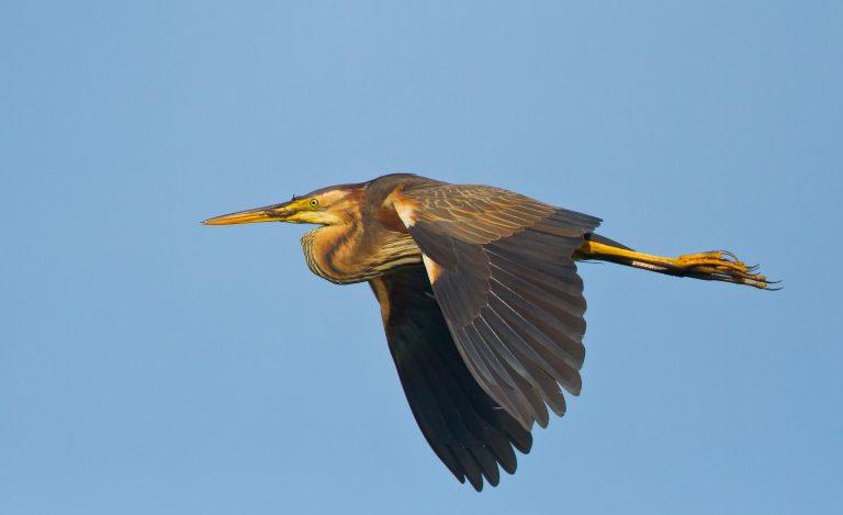 Nieuwe Rode lijst van Nederlandse broedvogels