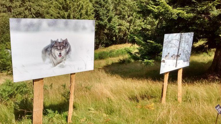 Natuurfoto-exposities in de open lucht