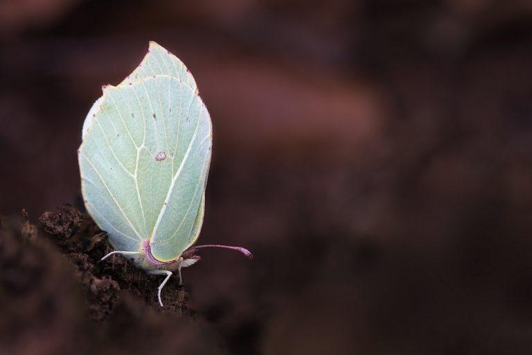 Vlinderfotografie in de late herfst