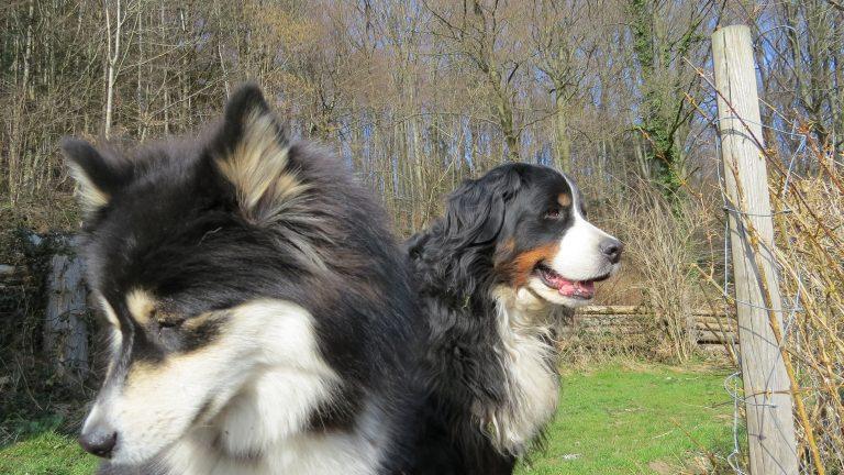Pittige discussie: loslopende honden in de natuur