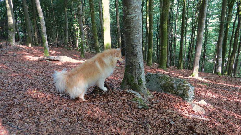 Het einde van een bos