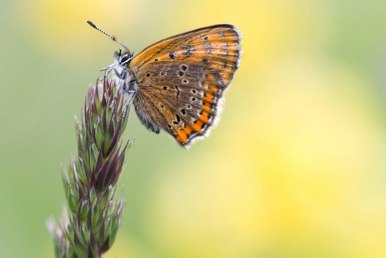 Feest mee met De Vlinderstichting