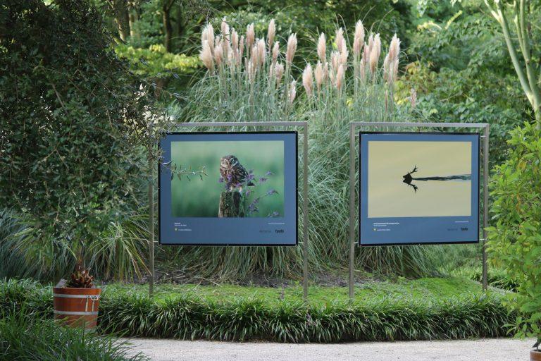 Twee exposities met winnaars van de Roots Natuurfotowedstrijd 2020