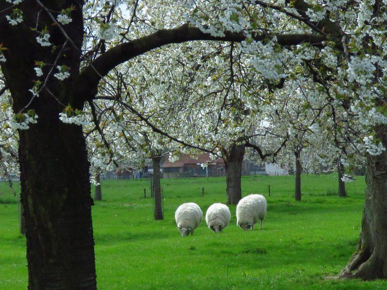 De meteorologische lente is begonnen!