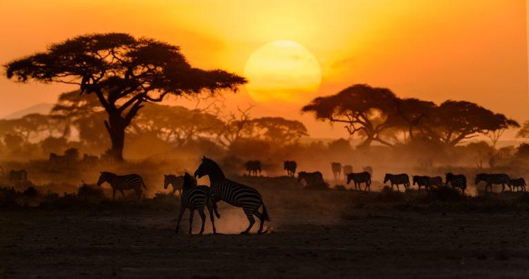 De gouden savanne