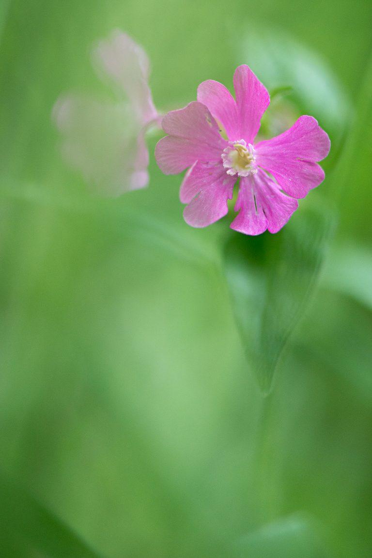 Zo fotografeer je wilde bloemen