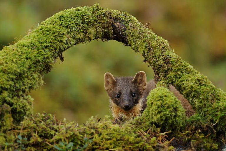 Lezing: zo leer je zoogdieren spotten