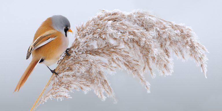 De 10 mooiste foto's van baardmannetjes, gemaakt door lezers van Roots