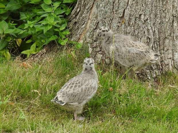 Laat jonge vogels met rust