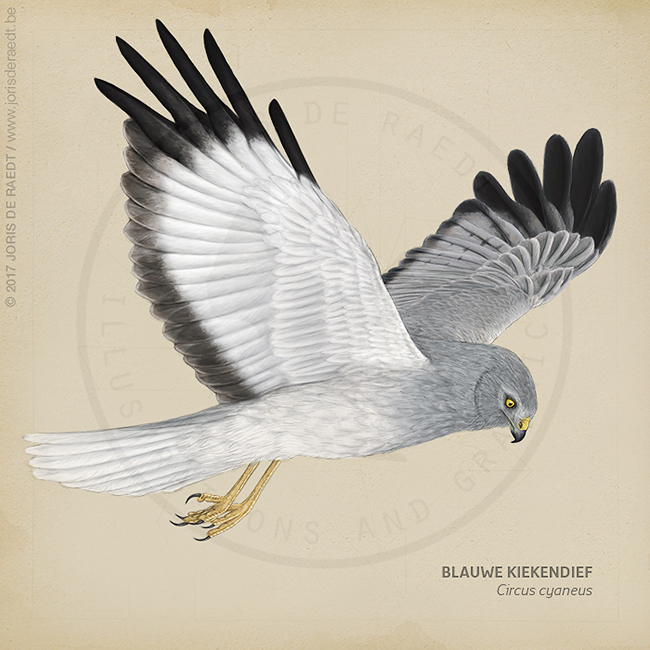 Rootsboek Roofvogels en uilen al in herdruk