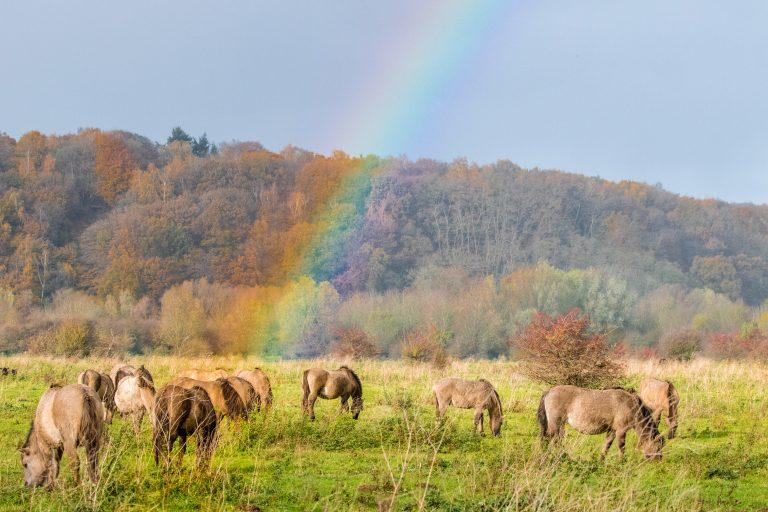 Regenboog: een kleurrijke lichtshow in de hemel