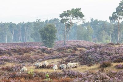 Nieuwe wandelroute: grenspark De Zoom-Kalmthoutse Heide
