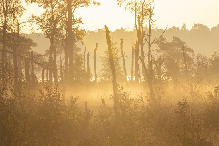 Nieuwe wandelroute: de stilte van grenspark De Zoom-Kalmthoutse Heide