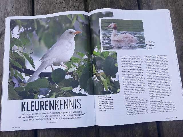 Nieuwe editie van Vogelmagazine is uit