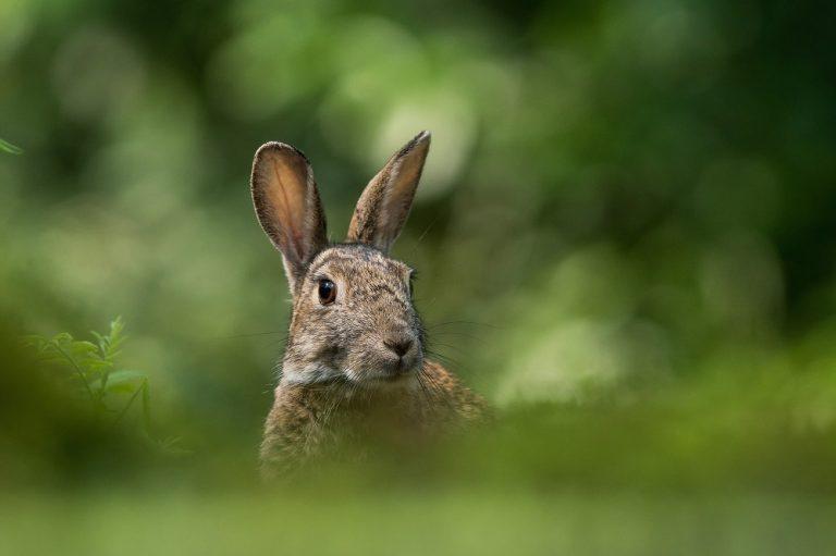 Mijn naam is… haas of konijn?