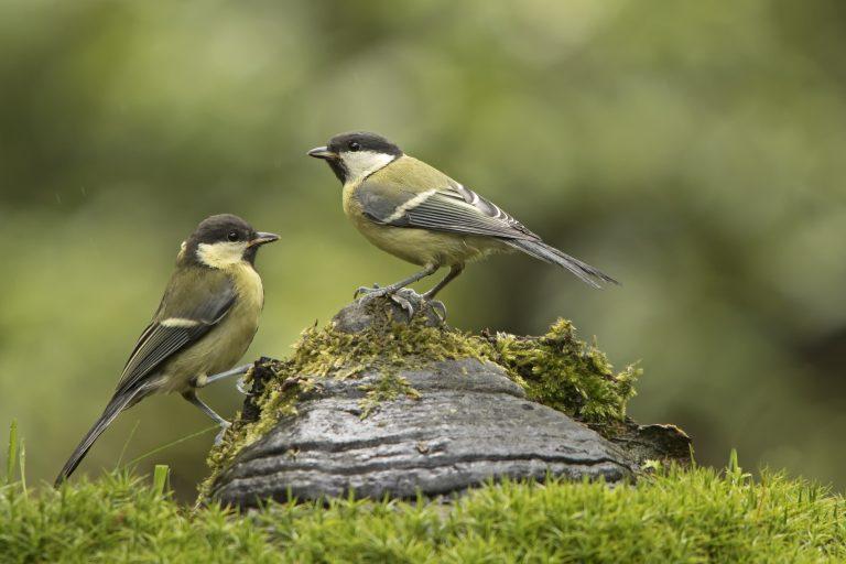 Van Tuinvogeltelling tot Tuintelling