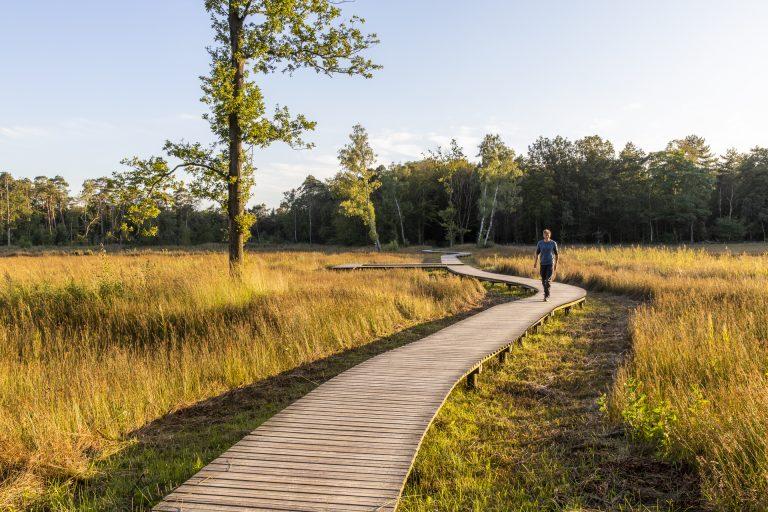 Nieuwe Roots-route: wandelen rond het Veluwse Landgoed Tongeren