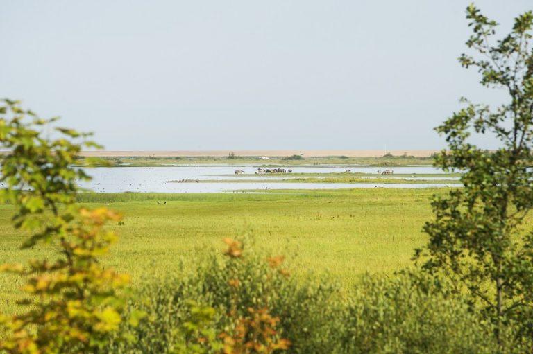 Wandel met nieuwe Roots-route langs het 50 jaar jonge Lauwersmeer