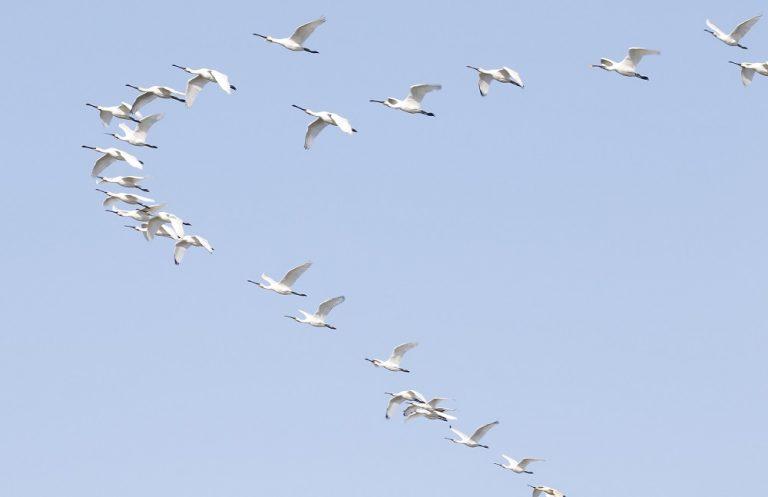 Vogelweekend op Texel succesvol
