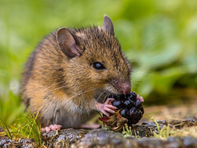 Natuurweetje: zijn dieren ook links- of rechtshandig?