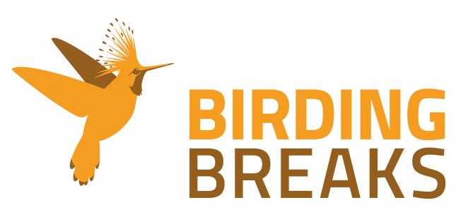 BirdingBreaks