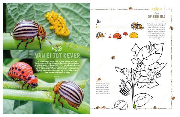 doe-boek insecten 2