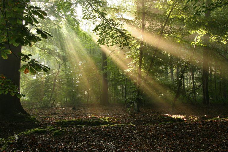 Een zonneharp in het bos fotograferen