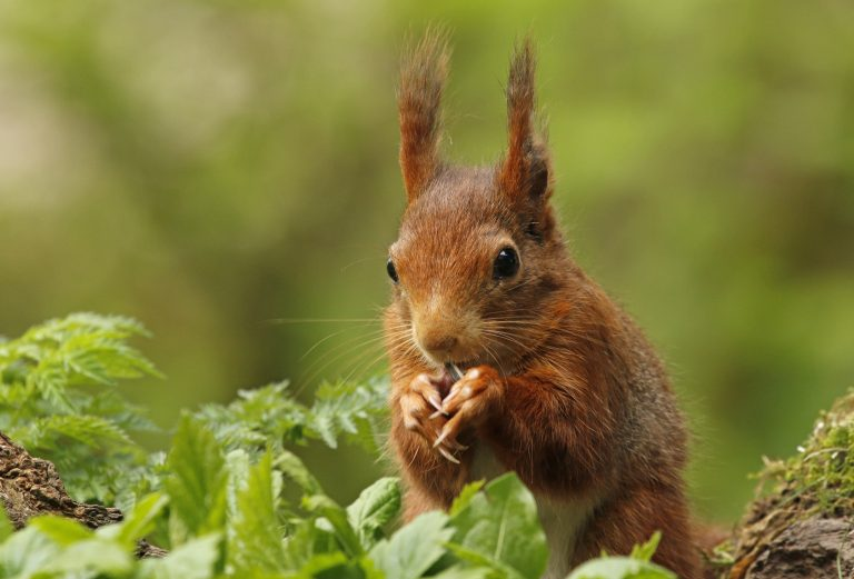 8 Vertroeteltips voor een diervriendelijke tuin in de herfst