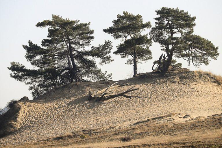 Hollandse woestijnen: de mooiste zandverstuivingen