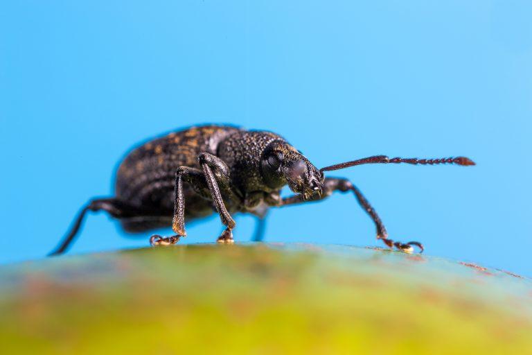 Steeds minder insecten, hoe erg is dat?