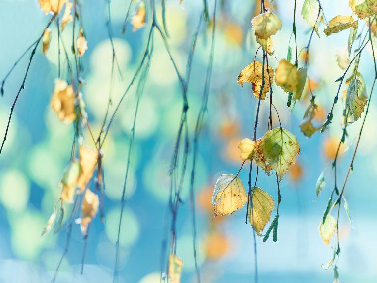 Goudgeel en frisblauw