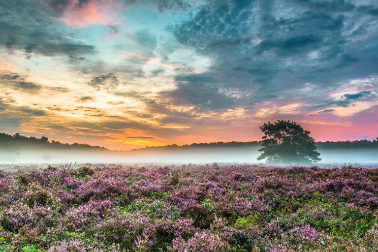 Natuurverschijnsel: hoe ontstaat mist?