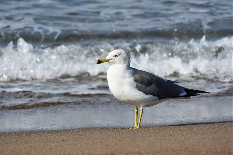Drinken zeevogels zout zeewater?