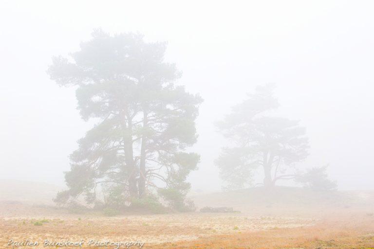 Fotograferen op een mistige ochtend