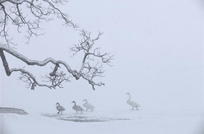 Kan natuurfotografie ook kunst zijn?
