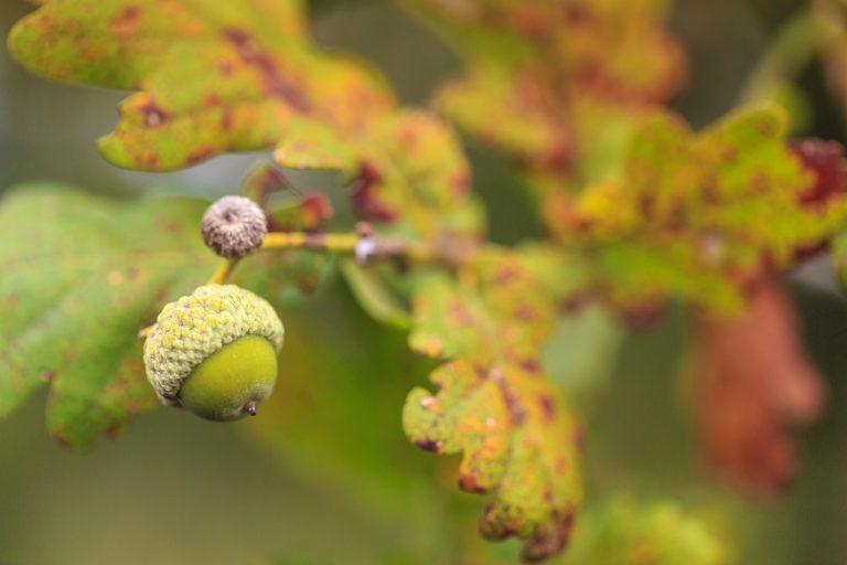 Mookerheide: hoe overleeft de natuur de droogte?