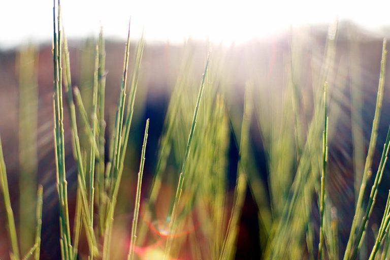 Groen doen in oktober: tips voor een duurzaam leven