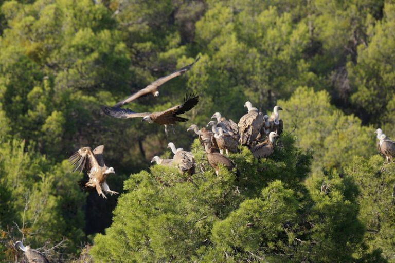 Ebrodelta: Catalonië op vleugels