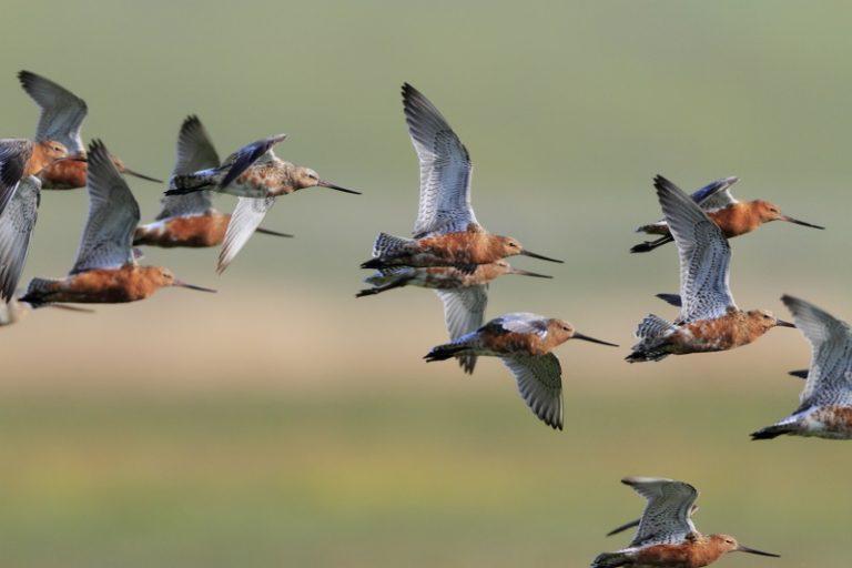 7 x magische migraties in de lucht