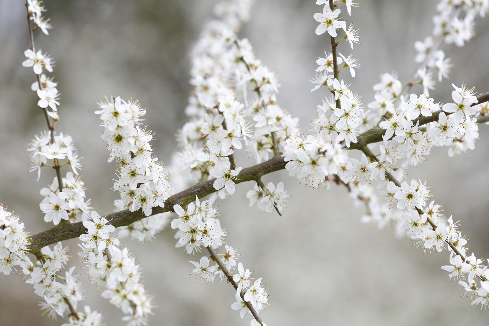 Nieuwe wandelroute: voorjaar in het Harderbos